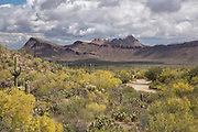 Golden Gate Road in Saguaro National Park West.  Scenic Drives SNP/TMP.