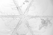 Macro Photograph of a hexagonal Snowflake.