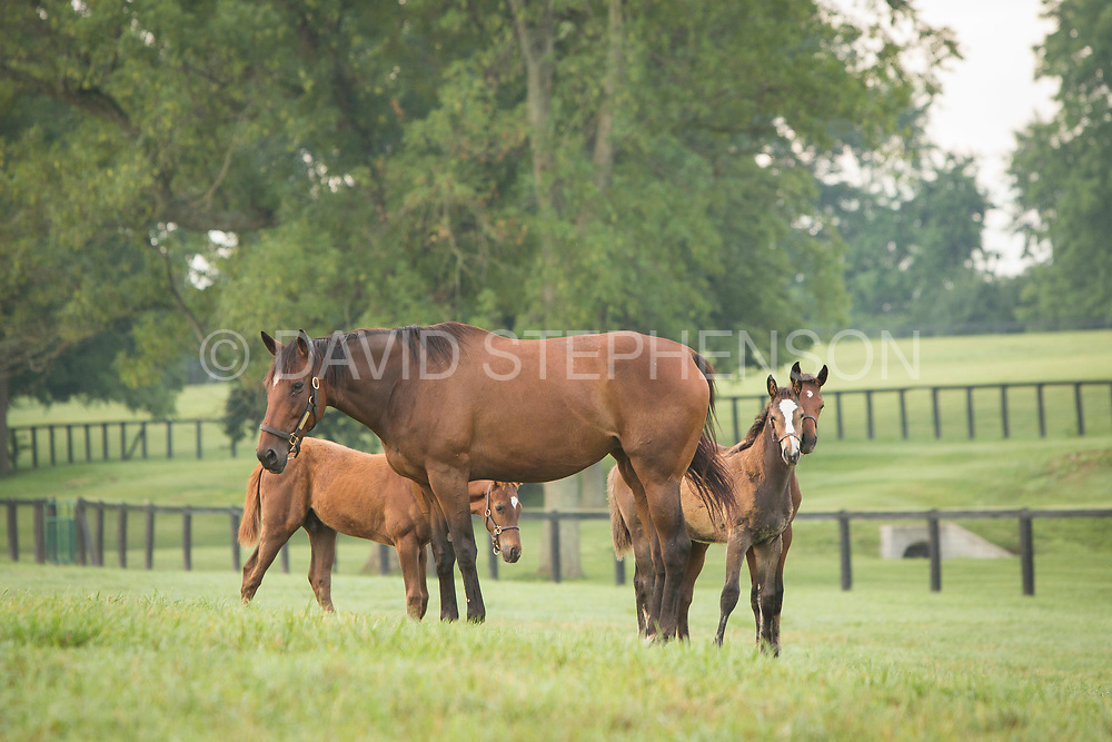 Town & Country Farms in Georgetown, Ky., Monday, July 11, 2016.