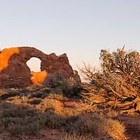 Turret Arch, located in Arches National Park, Moab, Utah, at sunrise, with very old juniper tree close by.