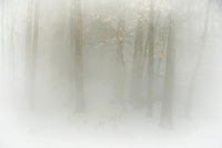 Winter Fog.  ©2017 Karen Bobotas Photographer