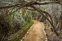 Jordanie - Site de Béthanie sur les bords du Jourdain - Lieu où Jean-Baptiste baptisa Jesus