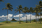A row of palm trees front Chinaman's Hat on the island of Oahu, Hawaii.Also known as Mokolii Island.