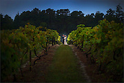 A bride and groom at Renault Winery in Egg Harbor City, New Jersey.