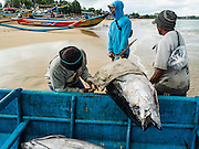 18 JULY 2016 - KUTA, BALI, INDONESIA:  Workers offload yellowfin tuna from a small boat at Pasar Ikan pantai Kedonganan, a fishing pier and market in Kuta, Bali. Yellowfin are extremely popular with Japanese consumers for sushi and sashimi and the best yellowfin caught in Indonesian waters are sent directly to Japan.   PHOTO BY JACK KURTZ