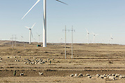 Chinese sheperds herd sheep underneath wind turbines. Located in Hebei Province, China this project consists a multiitude of 1.5 MW wind turbines to supply zero-emissions renewable electricity to the North China Power Grid. With a total capacity of 49.5 MW, this wind power plant supplies the North China Power Grid with approximately 103,00 MWh of clean electricity every year. The project reduces GHG emissions by displaying electricity which would otherwise have been drawn primarily from fossil fuel power stations and results in annual emissions reductions of roughly 100,000 tCO2e. China is currently the largest producer and consumer of coal in the world and derives nearly 80% of its electricity from this fuel source. Though investment in nuclear and renewable technologies is increasing in China, investment in coal-fired power generation still ranks first and continues to grow. Wind power in particular only amounts to less than three percent of the national electricity output.