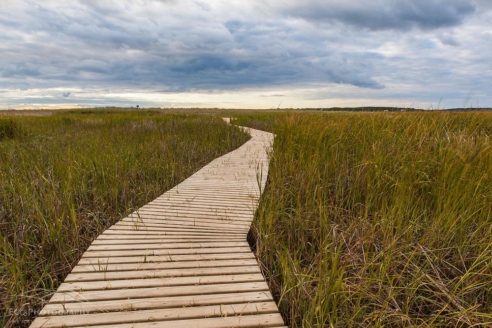 The boardwalk through the tidal marsh at Massachusetts Audubon's Wellfleet Bay Wildlife Sanctuary. Wellfleet, Massachusetts. Cape Cod.