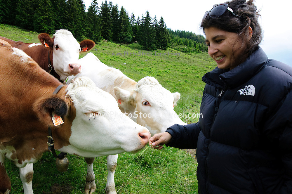 A young woman and Free grazing cows Photographed in Austria