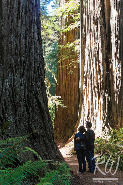 Married Couple Looking at Old-Growth Redwood Trees on Simpson-Reed Trail, Jedediah Smith Redwoods State Park, California
