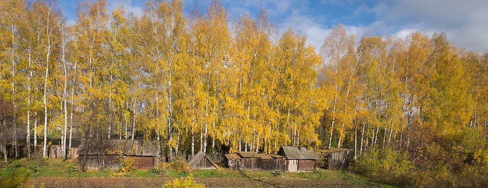 Siberian Landscape in Fall season