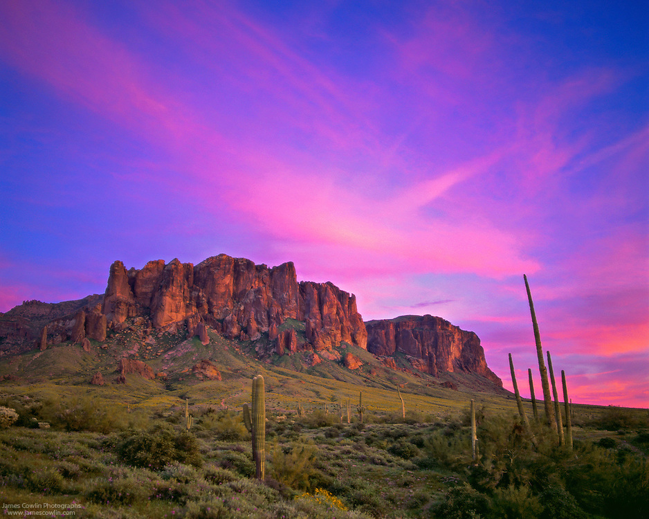 Setting sun turns the clouds pink and illuminates saguaro cactus and the Superstition Mountains in Lost Dutchman State Park in the Sonoran Desert of Arizona