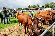 Beerfelder Pferdemarkt, Beerfelden, Odenwald, Hessen, Deutschland | Beerfelder Pferdemarkt, Beerfelden, Odenwald, Hesse, Germany