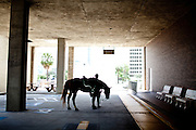 A mounted police officer takes a break in a downtown Tampa parking garage near the Republican National Convention, August 30, 2012.