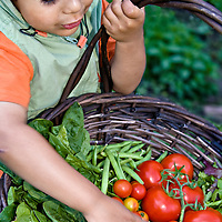 A young gardener holds a basket of freshly harvested produce from his family's garden.