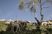 Bielmonte , Italy, Oasi Zegna