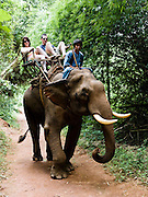 "Guests in ride an elephant in a ""howdah"" at Anantara Golden Triangle resort."