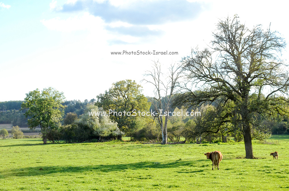rural landscape photographed near Chevilly, Loiret, France