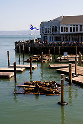 San Francisco: Sea lions and tourists at Pier 39. Photo 14-casanf78149. Photo copyright Lee Foster.