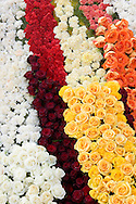 Rows of White, Yellow, Orange, Red, and Maroon Color Roses on Rose Parade Float, Pasadena, California - 2008