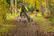 Competitor in 4 dog class during the WSA Dryland World Championship 2019 at Firle Country Estate in the South Downs National Park, Lewes, Sussex, United Kingdom on 17 November 2019.