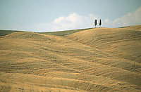 --- Rolling Fields in Tuscany --- Image by © Owen Franken/CORBIS