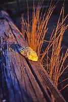 Shell on a log, sunset.