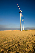 Wind turbines tower over a wheat field at a wind farm in Birds Landing, California. Each 265-foot wind turbine produces enough electricity per year to power 350 average-size California homes.