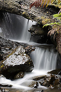 Forest Cascade - Tasmania