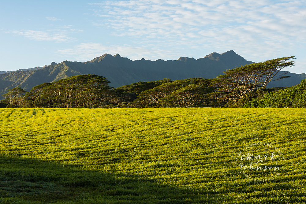 Green grass field near Kilauea, Kauai, Hawaii