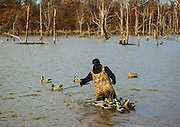 Tony Osborne retrieving decoys after the day's hunt in Shamrock, Oklahoma