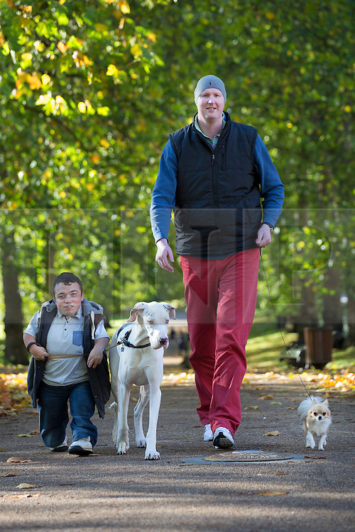 © licensed to London News Pictures. London, UK 04/11/2013. One of the UK's shortest men, James Lusted (left) with Ruach the Great Dane and the UK's tallest man, Neil Fingleton with Pickle the Chihuahua taking a walk in Green Park ahead of Discover Dogs event at Earls Court on 9 and 10 November, where people can meet more than 200 dog breeds. New statistics from the Kennel Club show some native breeds are rapidly declining as other fashionable breeds of foreign origin soar in number. The Kennel Club is reminding people to do their research before they buy a dog, and to not always opt for the popular or fashionable choice. Photo credit: Tolga Akmen/LNP