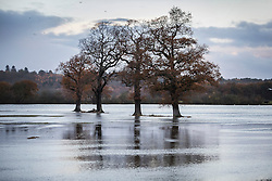 © Licensed to London News Pictures. 22/11/2016. Cobham, UK. The River Mole has burst it's banks on farmland near Cobham. Parts of the United Kingdom are still experiencing flooding after storm Angus. Photo credit: Peter Macdiarmid/LNP