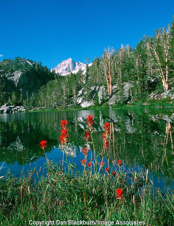 Indian Paintbrush  frames a small lake in the John Muir Wilderness of the Sierra below Bear Creek Spire