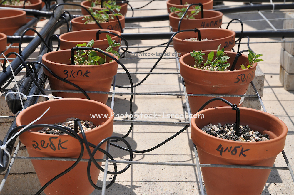 Rooftop garden experiment plants are monitored for growth using differnt soil, irrigation and fertilizers combinations
