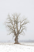 Winter Tree Rural Missouri © Karen Pulfer Focht-ALL RIGHTS RESERVED-NOT FOR USE WITHOUT WRITTEN PERMISSION