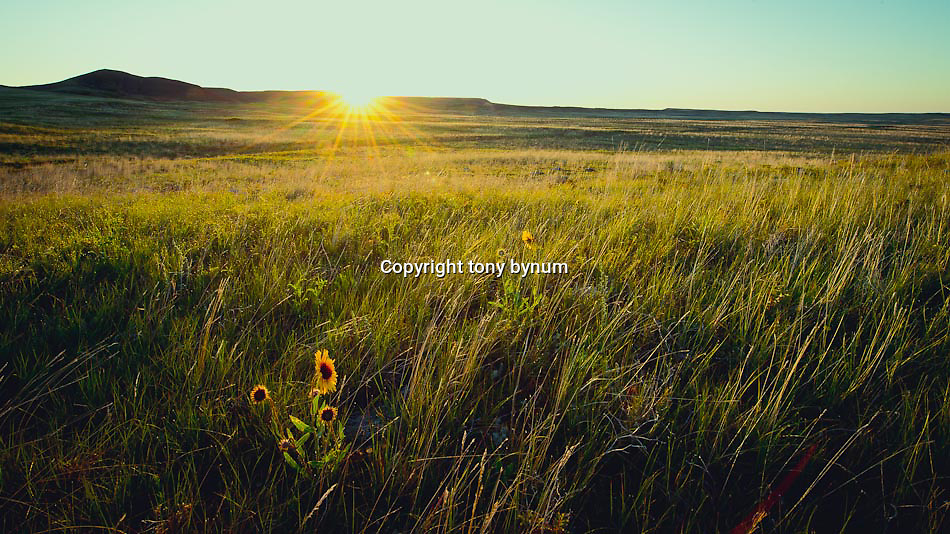 the sun rises on the prairie of eastern montana conservation photography - montana wild prairie