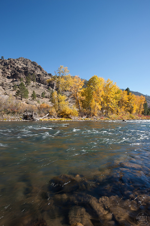 """Truckee River in Autumn 11"" - Photograph of yellow leaved cottonwood trees, taken along the shore of the Truckee River in Autumn."