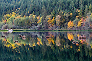 Fall colors and deadheads along the shore of Silver Lake in Silver Lake Provincial Park near Hope, British Columbia, Canada