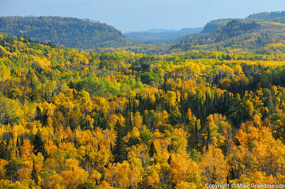 Overview of autumn colored forest in Neebing County<br /> South of Thunder Bay<br /> Ontario<br /> Canada