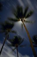 An upward view of palm trees blowing in Hawaiian Trade Winds