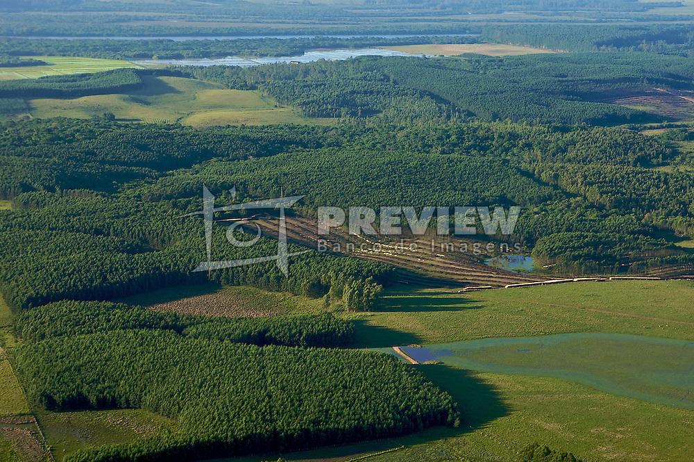 Fazenda de reflorestamento,em Butiá, Rio Grande do Sul . FOTO: Jefferson Bernardes / Preview.com