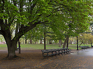 A bench at the Great Lawn in Central Park