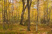 Fall Foliage Green Mountains, Vermont