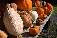 Pumpkins and produce on display at a roadside farm stand.