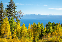 """Aspens Above Lake Tahoe 10"" - Photograph of yellow aspen trees in the Fall at a grove above Lake Tahoe."