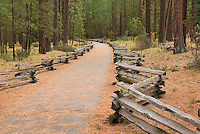 Nature trail leading to the Metolious River Springs, Deschutes National Forest Oregon