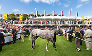 Maxime Guyon on Solow winning the Qatar Sussex Stakes at the Qatar Goodwood Festival, better known as Glorious Goodwood. Day Two.<br /> Picture date: Wednesday July 29, 2015.<br /> Photograph by Christopher Ison &copy;<br /> 07544044177<br /> chris@christopherison.com<br /> www.christopherison.com