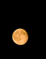 A harvest moon completes it's monthly cycle.  Courtenay, Comox Valley, Vancouver Island, British Columbia, Canada.