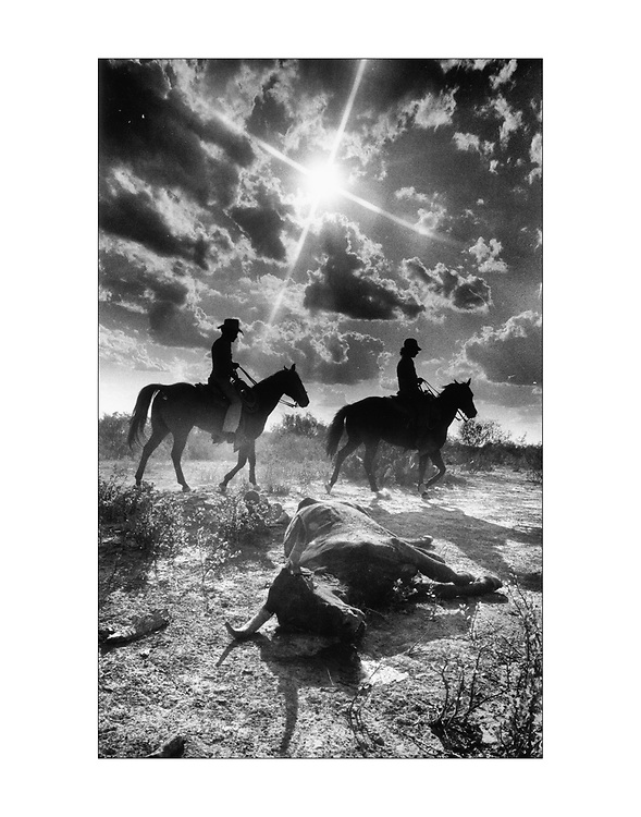 Cowboys ride past a dead steer, the victim of a severe drought on a ranch near Cattula, Texas. 1980 Ed Hille (keywords: texas; cowboys;drought)