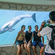 Tourists watch a dolphin (porpoise) swimming in an underwater aquarium at Xcarat Maya theme park south of Cancun and Playa del Carmen on Mexico's Yucatana Peninsula.